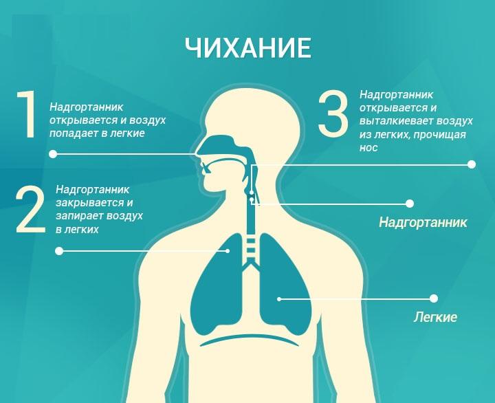 Почему мы чихаем? Процесс чихания